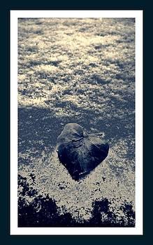 Leaf alone by Paul Szakacs