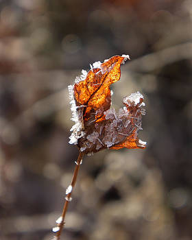 Leaf and ice by Dawn Hagar