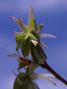 Dawn Hagar - Leaf Angel
