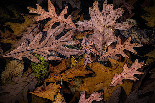 Randall Nyhof - Autumn Leaf Art Shapes and Patterns