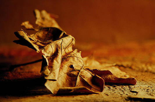 Leaf by Bruce Rolff