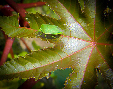 Christy Usilton - Leaf Bug
