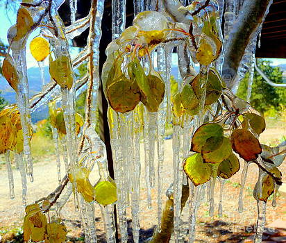 Leaf-cicles by Pete Dionne