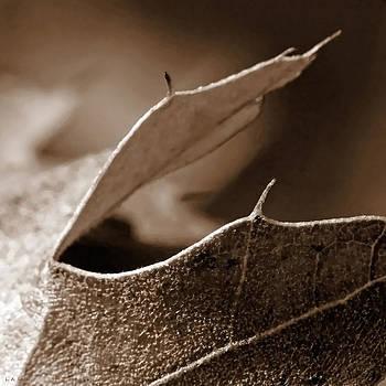 Leaf Collage 2 by Lauren Radke