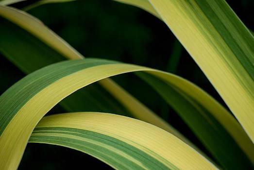 Leaf Curves by Shanna Lewis
