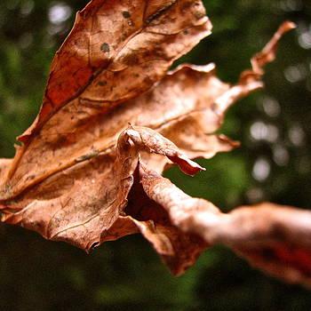 Sandy Tolman - Leaf Dance 8580 SQ