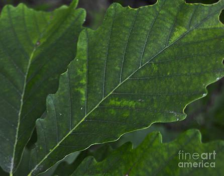 Leslie Cruz - Leaf Details