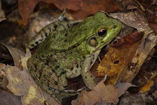 Joe Bledsoe - Leaf Frog