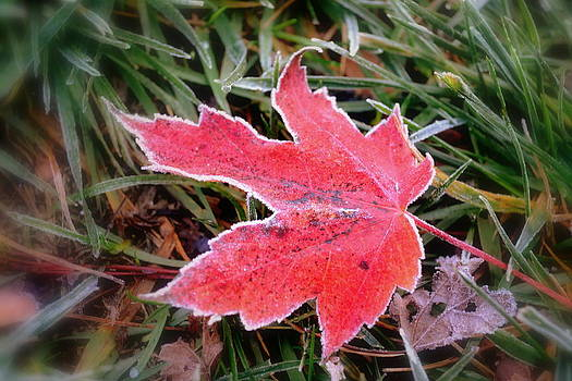 Leaf Frost by Michelle Ayn Potter