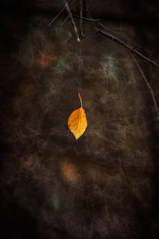 Ray Van Gundy - Leaf Hanging from Spider Web