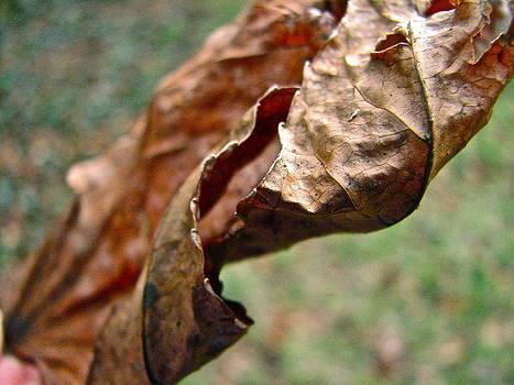 Sandy Tolman - Leaf in Brown 8529
