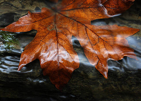 Leaf in Runoff by Jm Nicholson