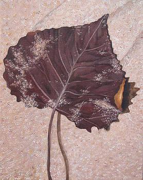 Leaf in Sand by Brandy Gerber