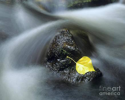 Leaf in stream by Derek Croucher