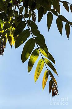 Kate Brown - Leaf Light