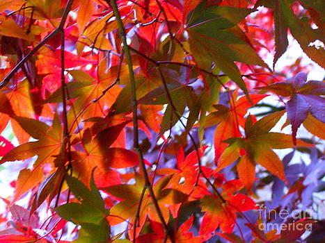 Carolyn Kami Loughlin - Leaf Lights