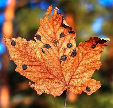 Leaf by Martin Hristov