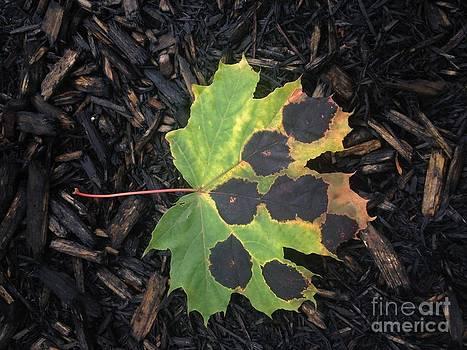 Leaf Me Alone by Deborah MacQuarrie-Selib