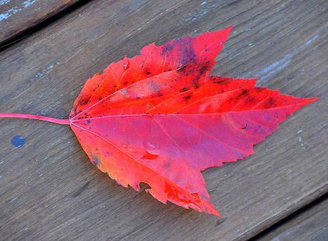 Linda Rae Cuthbertson - Leaf Me Alone