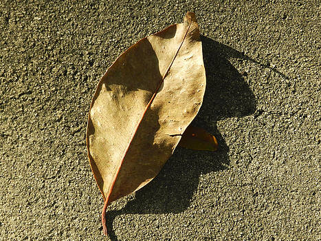 Stuart Brown - Dry leaf on concrete # 2