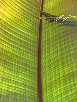 Alfred Ng - leaf pattern