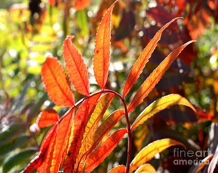 Valerie Fuqua - Leaf Spiral