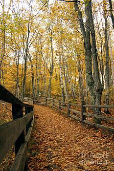Leaf Trail by Denise Lilly