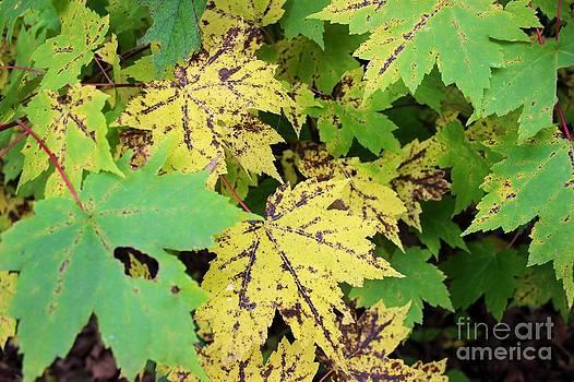 Leaf Wonder by Laura Paine