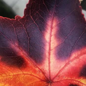 #leaf by Zarah Delrosario