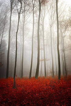 Leafless by Philippe Sainte-Laudy