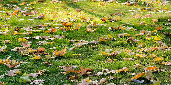 Leafs on the ground. by Slavica Koceva