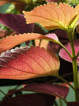 Leafy Plant by Nelson Watkins