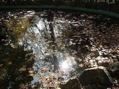 Leafy Pond by Angela Zafiris