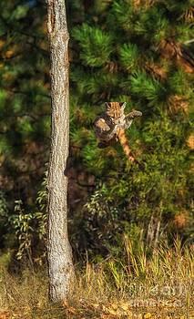 Leap of Faith I by Danny  Nestor