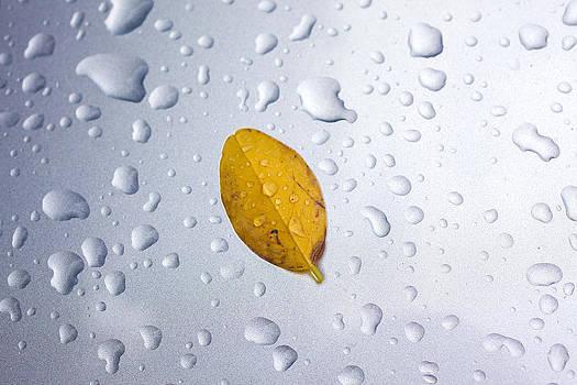 Leave On Drops by Martin Joyful