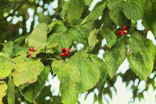 Leaves and Berries by Carolyn Ricks