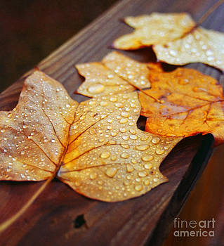 Leaves Are Falling All Around by Adam Dowling