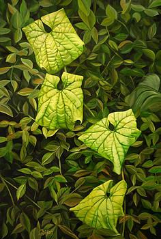Leaves by Bijan Masoumpanah