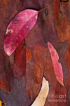 Leaves by David Benson