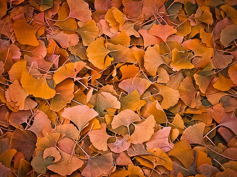Leaves by Garth Woods