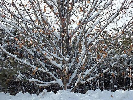 Leaves in Snow by Gene Cyr