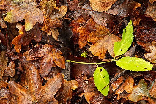 Fizzy Image - leaves