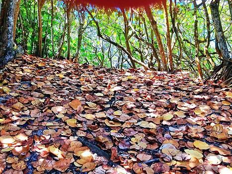 Leaves by Mary Barrett