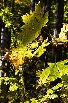 Leaves of Autumn  by Tim Rice