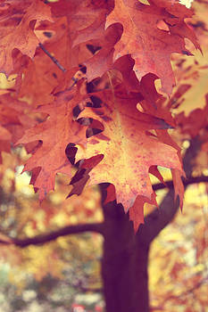 Leaves of Fall by Cathie Tyler