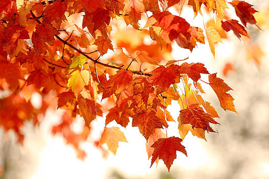 Leaves of Fall by Craig Pifer