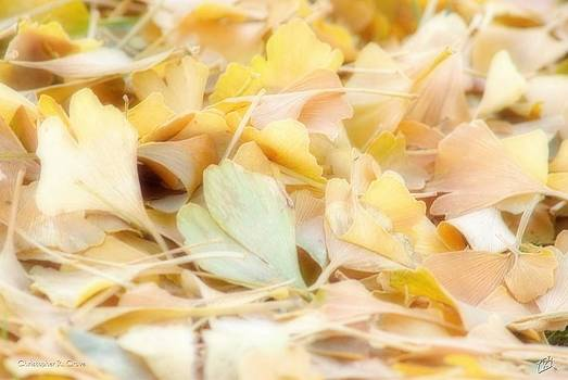 Leaves of Ginkgo by Christopher Grove