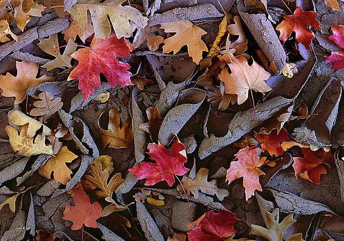 Scott Wheeler - Leaves on Curled Mud