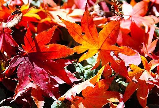 Leaves on Ground by Brad Fuller