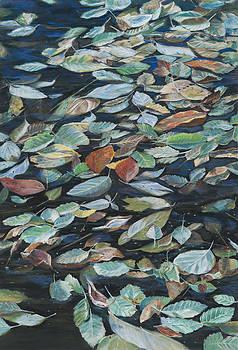 Leaves on Pond by Nick Payne